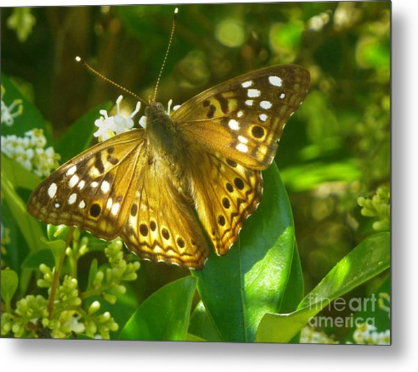 Nature In The Wild - Kaleidoscope Of Color Metal Print by Lucyna A M Green