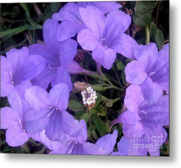 Nature In The Wild - Ring Around The Posy Metal Print by Lucyna A M Green