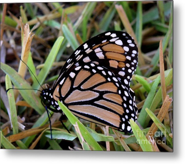 Nature In The Wild - Traveling Light Metal Print by Lucyna A M Green