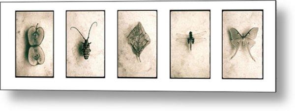 Nature Series Metal Print