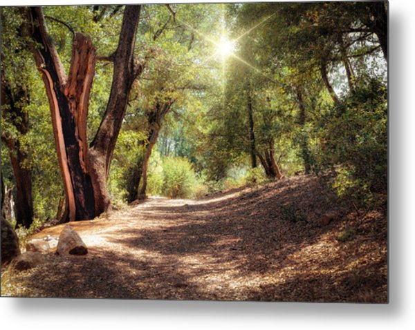 Metal Print featuring the photograph Nature Trail by Alison Frank