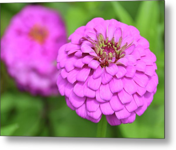 Nature's Icing Metal Print by JAMART Photography