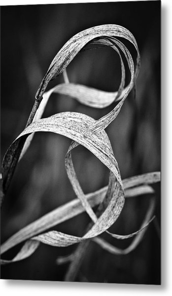Natures Knot Metal Print