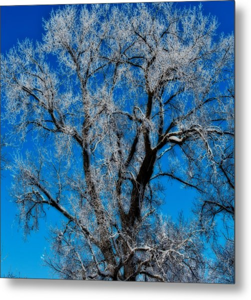Natures Lace Metal Print