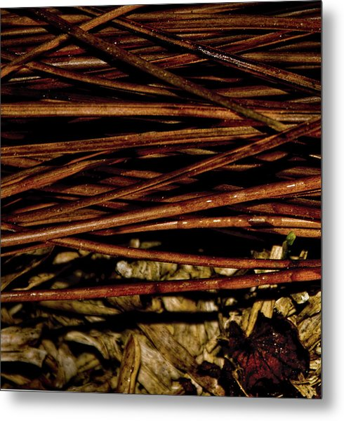 Nature's Lattice Metal Print