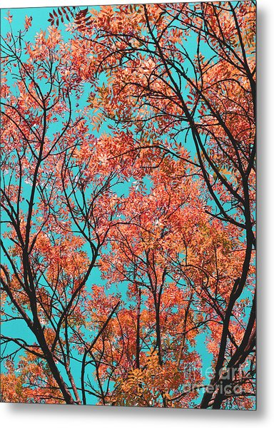 Natures Magic - Orange Metal Print