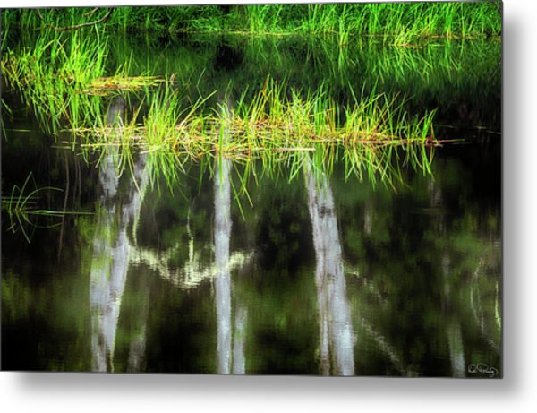 Metal Print featuring the photograph Nature's Mirror by Dee Browning
