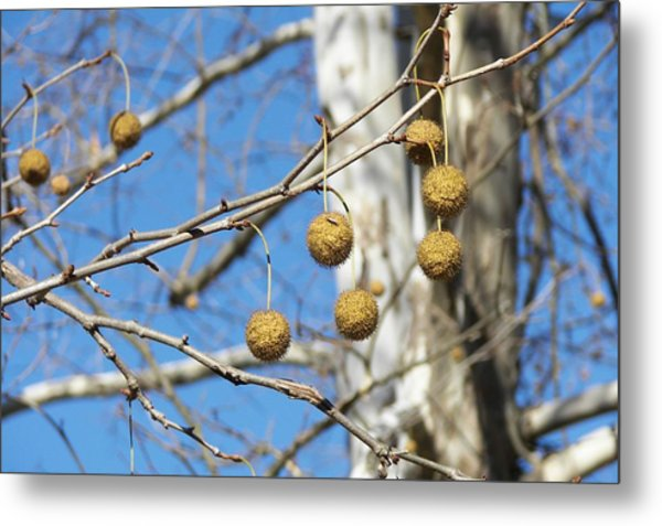 Nature's Ornaments Metal Print by JAMART Photography