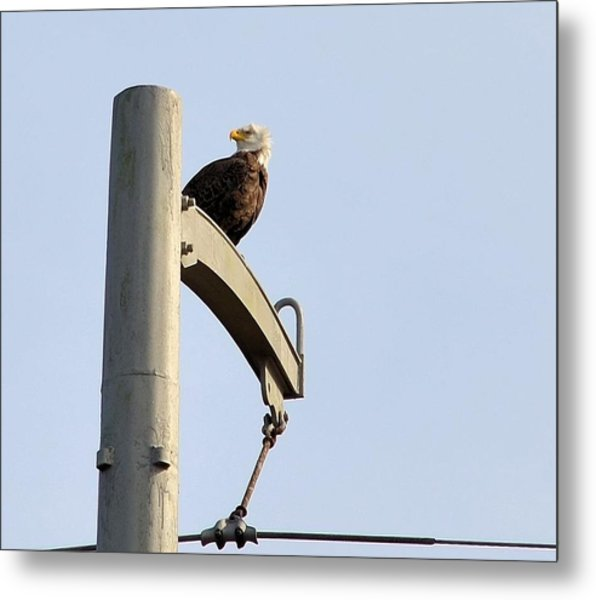 Nature's Philadelphia Eagle Metal Print