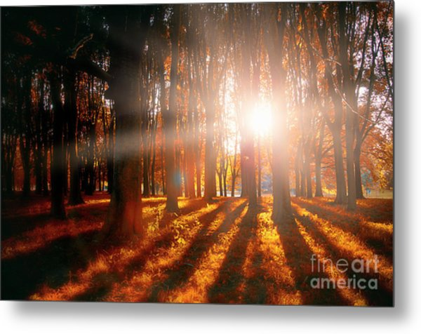 Nature's Shadows Metal Print by Alessandro Giorgi Art Photography