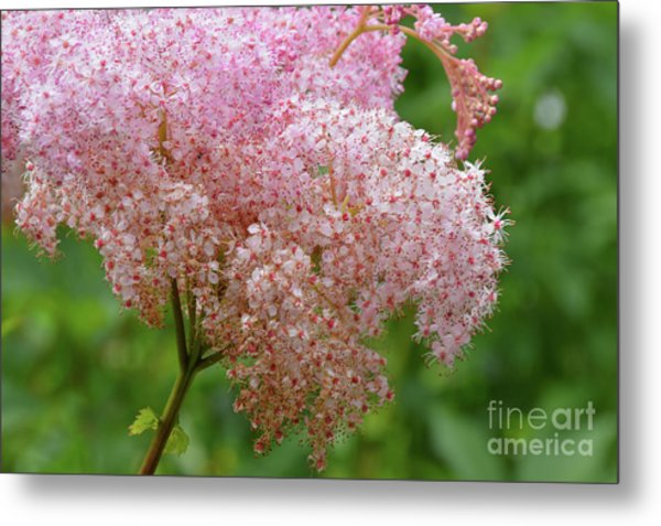 Natures Untouched Beauty Metal Print