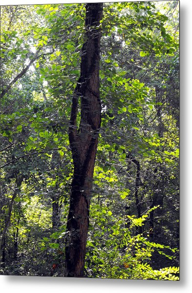 Needle Hook Tree Metal Print by Eva Thomas