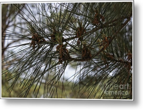 Needles Attached Metal Print