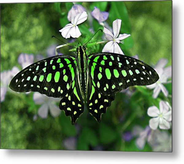 Neon --- Tailed Jay Butterfly Metal Print