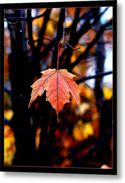 New England Fall - Lone Metal Print by William Bray