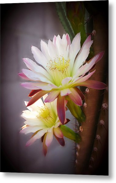Night Blooming Cereus Metal Print