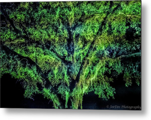 Night Moss Metal Print