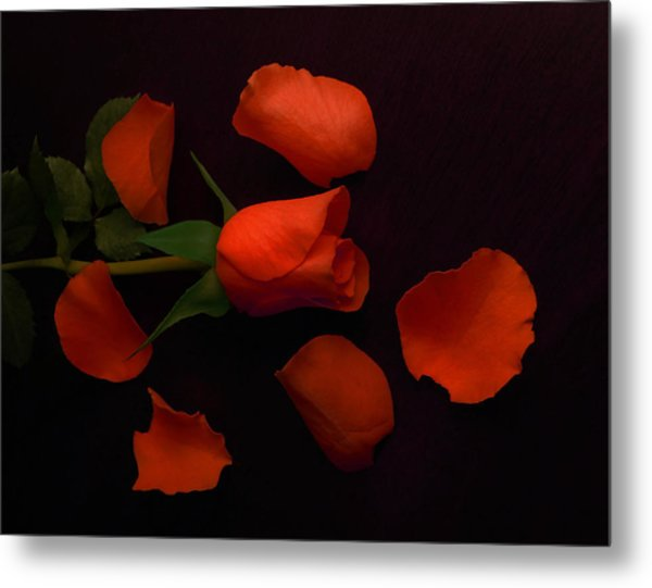 Night Rose 2 Metal Print