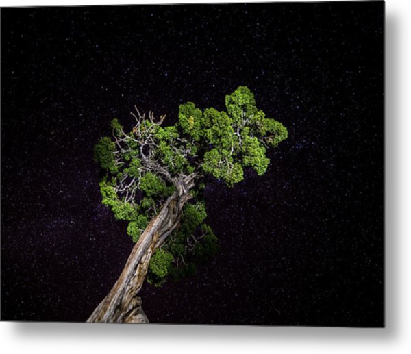 Metal Print featuring the photograph Night Tree by T Brian Jones