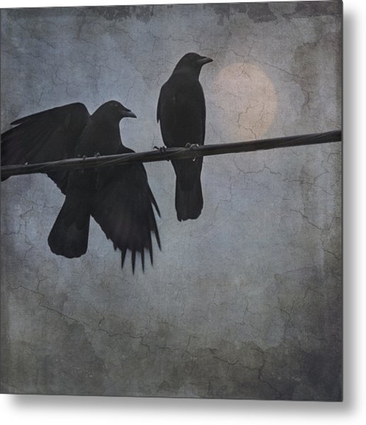 Metal Print featuring the photograph Night Watch  by Sally Banfill