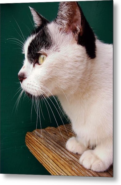 Nine Lives Metal Print by JAMART Photography