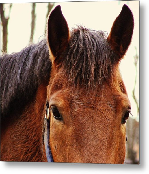 Noble Companion Metal Print by JAMART Photography