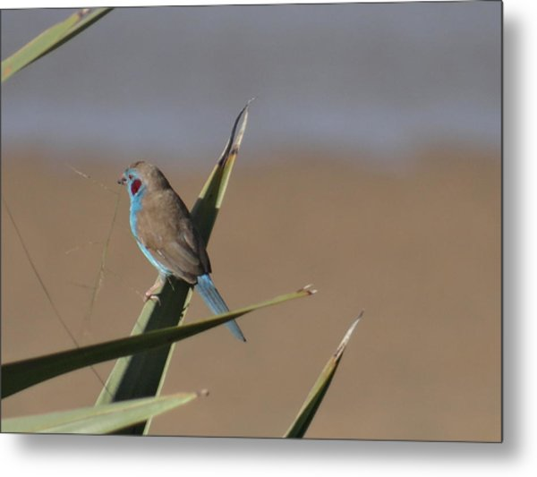 North - Eastern African Home - Close Up Grey And Blue 1 Metal Print