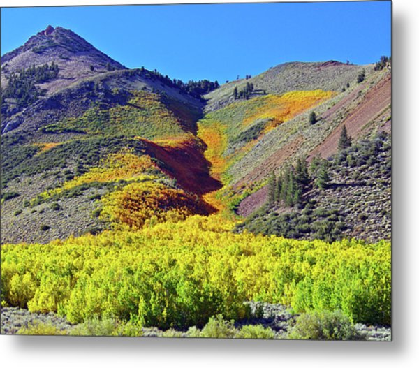 North Lake Aspen Stand Metal Print