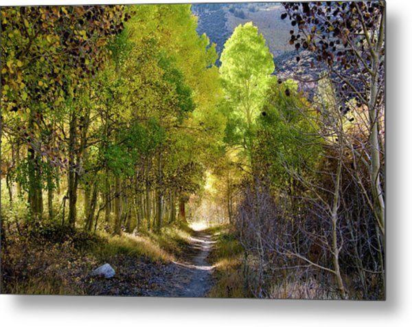North Lake Aspens 2 Metal Print