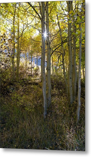 North Lake Aspens Metal Print