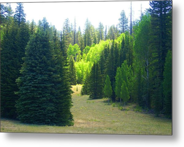 Metal Print featuring the photograph North Rim Landscapes by Broderick Delaney