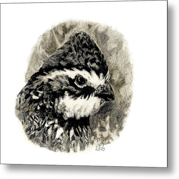 Northern Bobwhite Metal Print