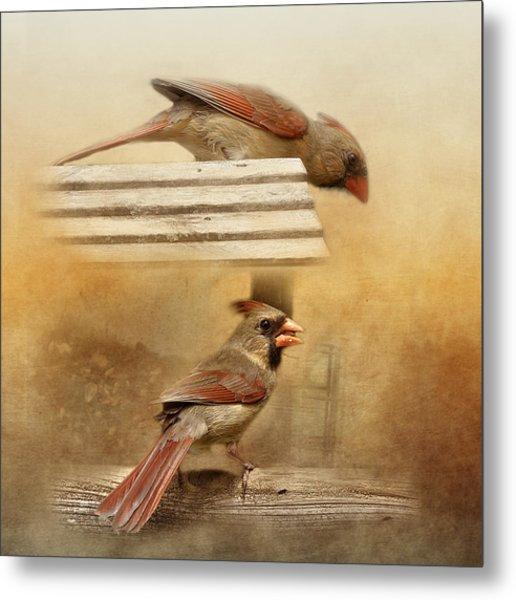 Northern Cardinals At Sunrise Metal Print