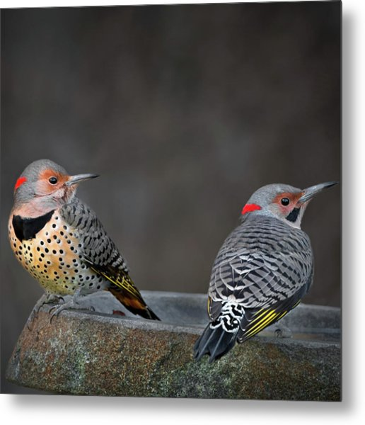 Northern Flickers Square Metal Print