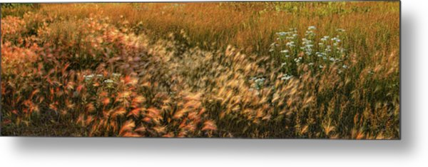 Northern Summer Metal Print