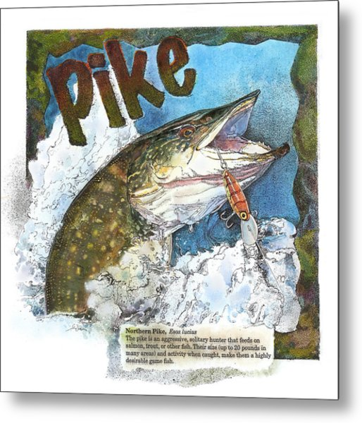 Northerrn Pike Metal Print