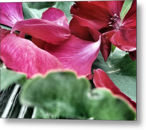 Not A 4 Leaf Clover Metal Print