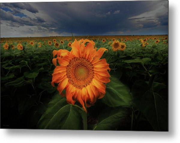Not Just Another Face In The Crowd  Metal Print