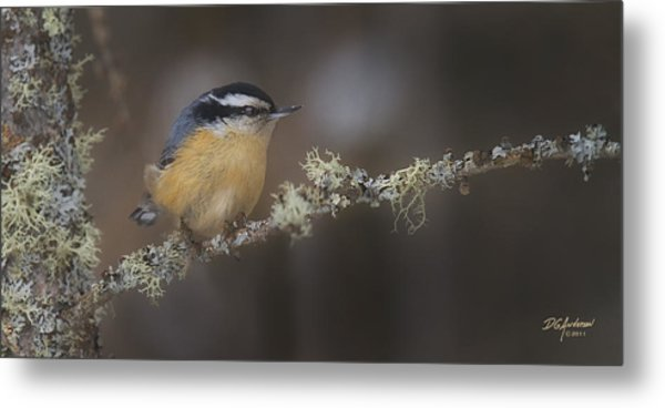 Nuts About Nuthatches Metal Print