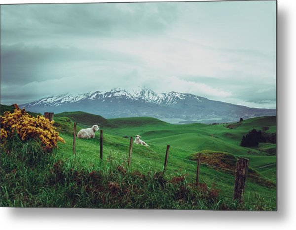 Nz Dreaming Metal Print