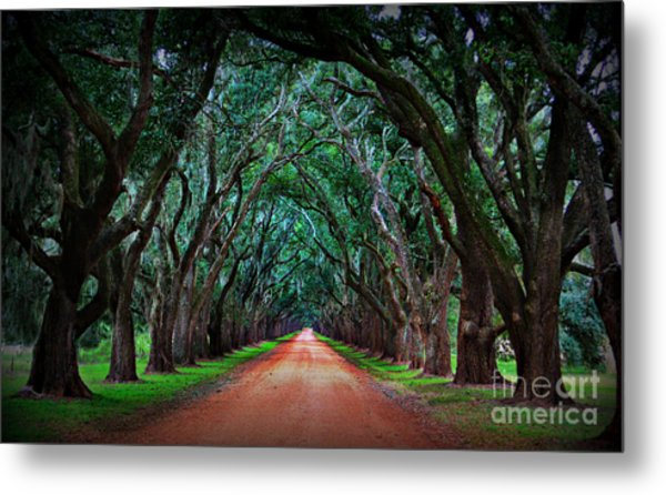 Oak Alley Road Metal Print