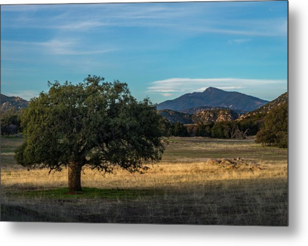 Oak And Cuyamaca Metal Print
