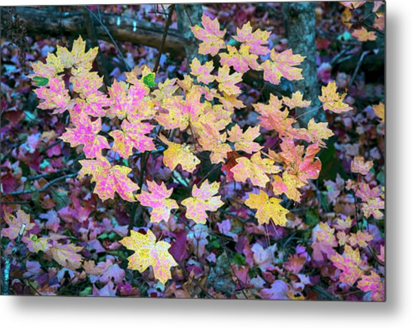 Oak Creek Canyon Fall Colors Metal Print