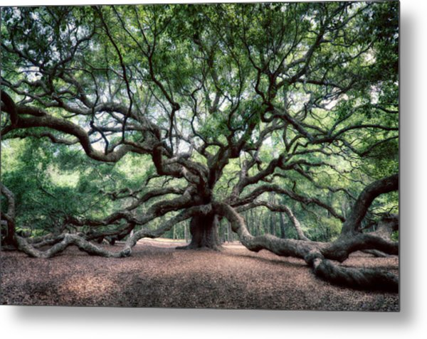 Oak Of The Angels Metal Print