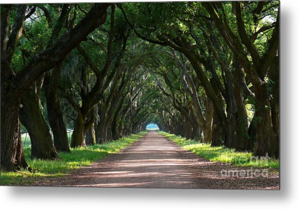 Oak Tree Path Metal Print