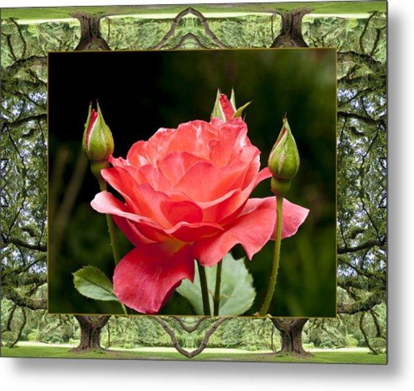 Oak Tree Rose Metal Print