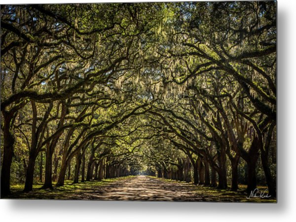 Oak Tree Tunnel Metal Print