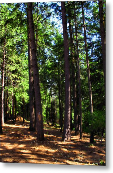 Oakrun Forest Metal Print