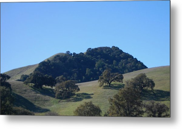 Oakscape Metal Print by Jean Booth