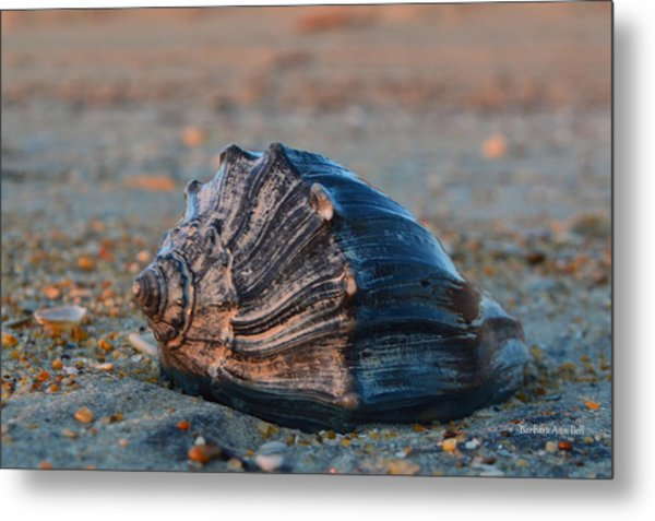 Ocean Treasures Metal Print